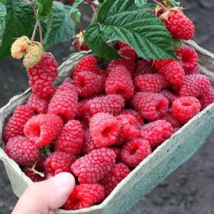 Плодовые кустарники (Весна 2021)