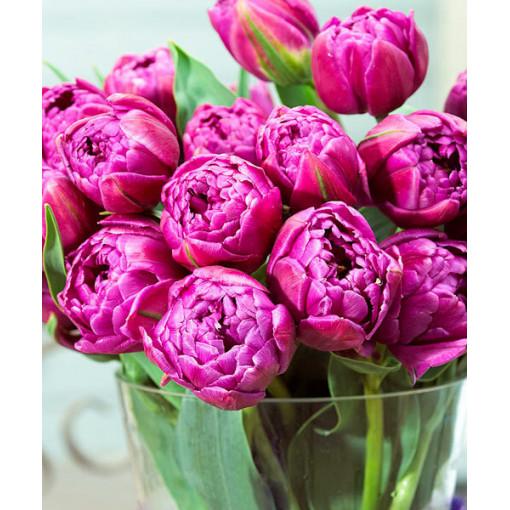 Тюльпан Дабл Флэг (махровый) (Упаковка 10 шт.)