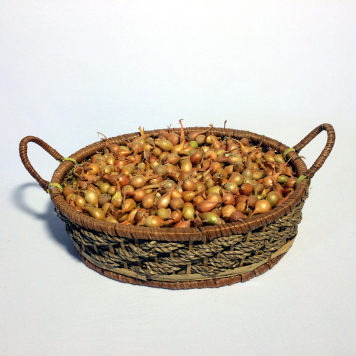 Лук-севок Штутгратер Ризен (мелкий 8-14 мм) 1 кг