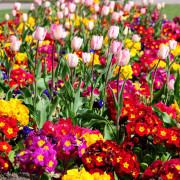 Растения (Весна 2021)